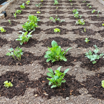 FarmBot reduces manufacturing complexities to meet growing demand for micro-farming